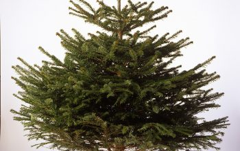 Real Christmas Tree Recycling Less Waste
