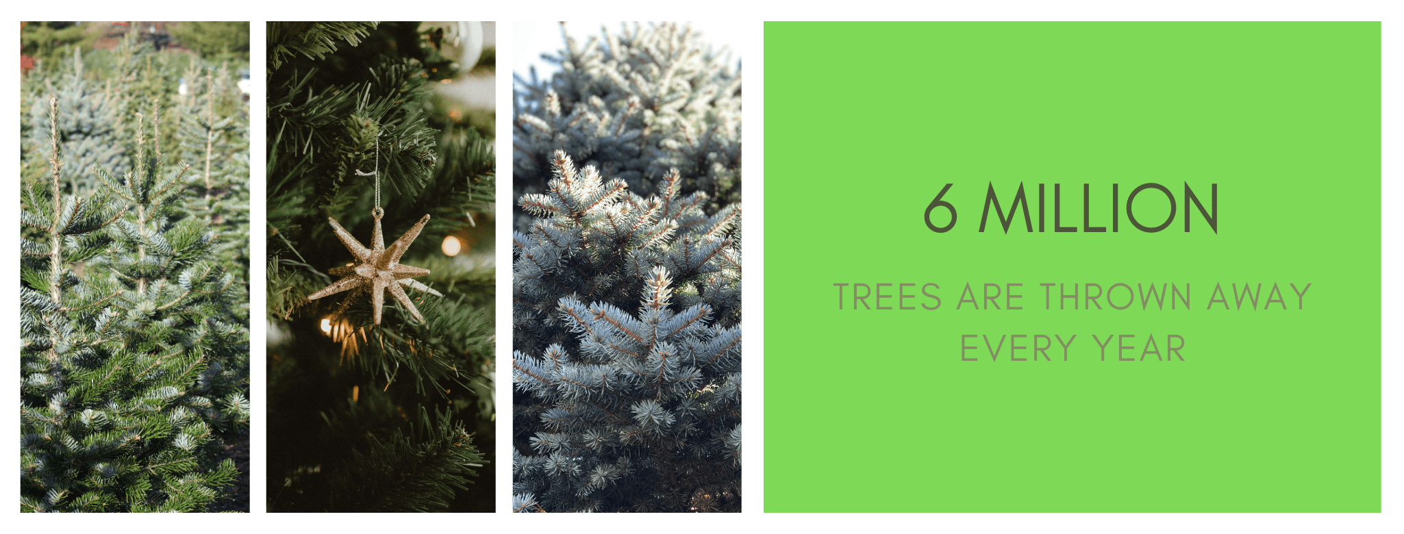 6 Million Chrisatmas trees are discarded every year.