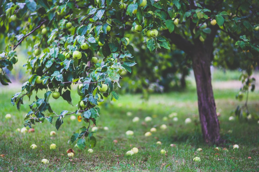 Apple Pressing - University of Loughborough Fruit Routes.